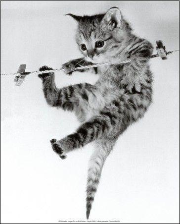 chaton sur corde à linge ^^