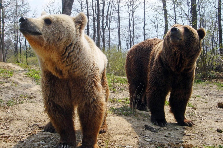 Cristi and Lydia were two of the first bears to find safety and freedom in the Romanian sanctuary – which is funded by WSPA supporters like you! Click this picture to read their story.