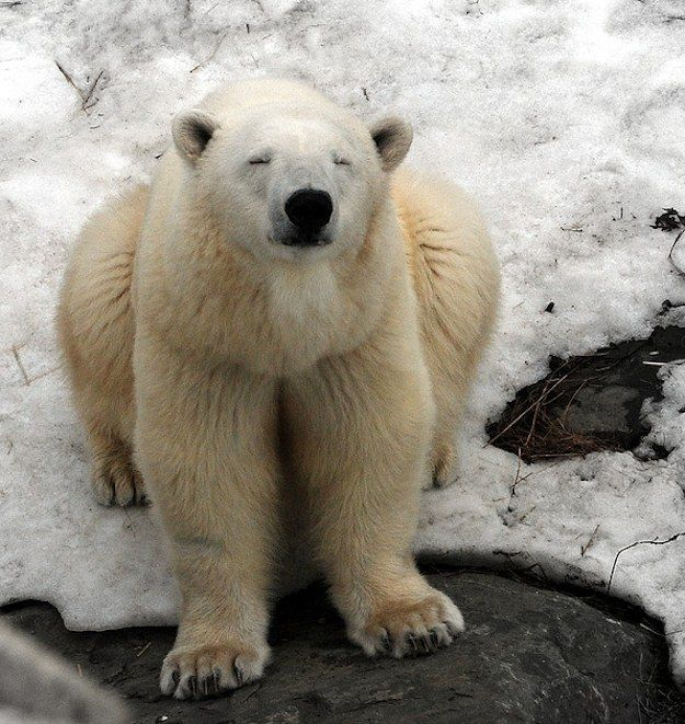 2. There's also a prison for polar bears who break into people's homes for food. | 36 Delightful Facts About Canada