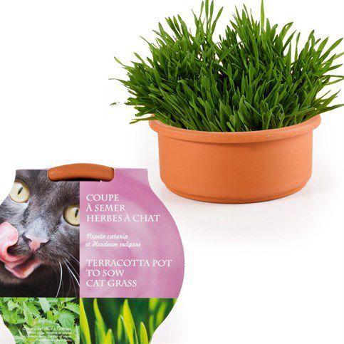 les 25 meilleures idées de la catégorie herbe a chat sur pinterest