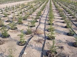 drip irrigation supplies is most beneficial way of gardening. Drip irrigation helps in improvement of growth and control fungal.
