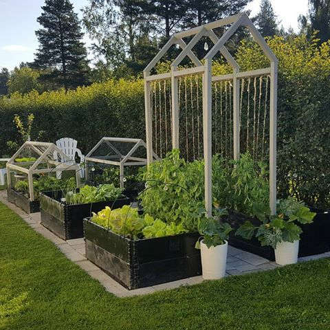 Neat little kitchen garden with a nice trellis for growing climbers. Raised beds and simple paving create a clean modern look.