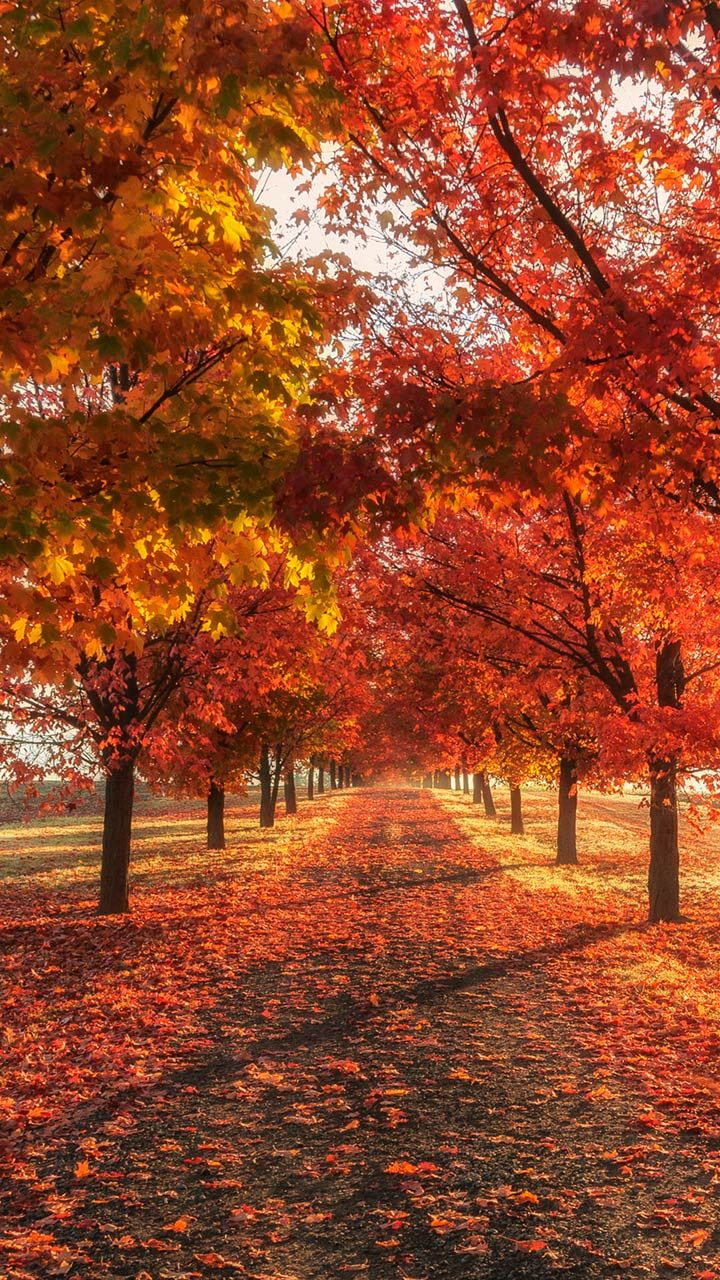 Autumn live wallpaper for Android. Autumn free download for tablet...
