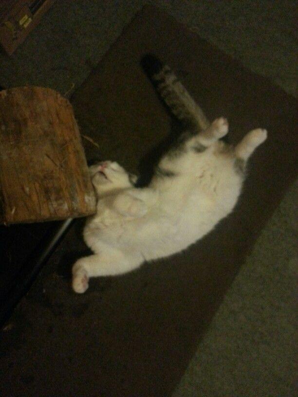 Only Oscar can sleep like this