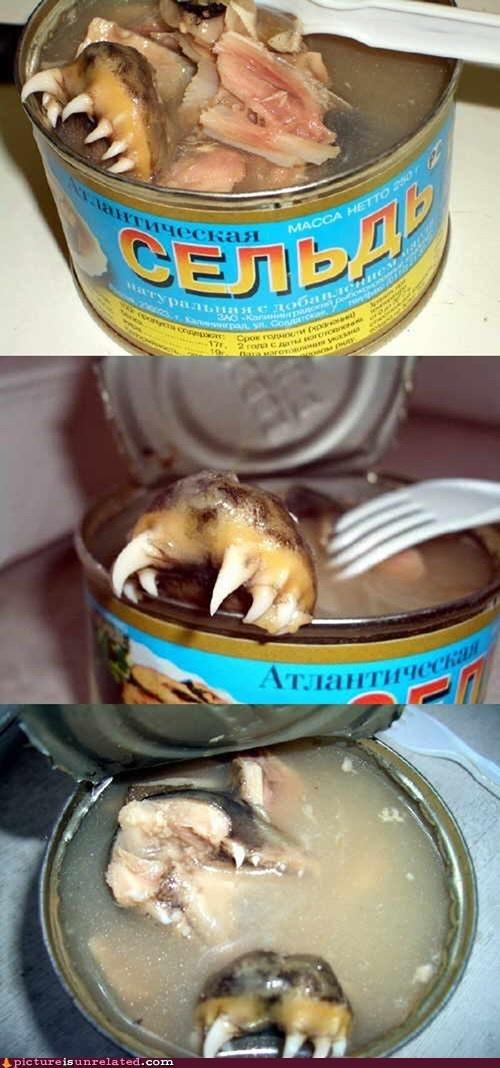 Fresh Vs Food Food Canned