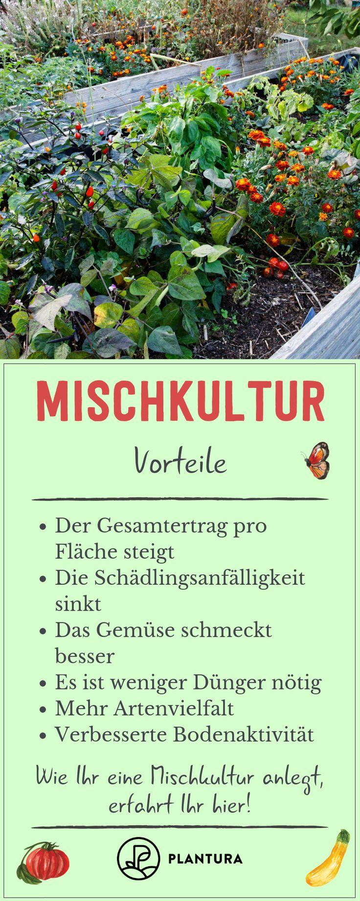 Mischkultur: Welche Pflanzen passen ideal zusammen