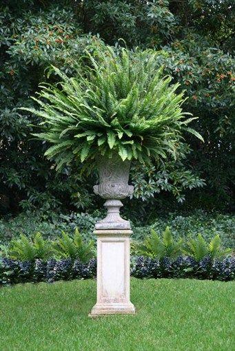 Pedestal, Urn, Victorian, Fern  Container Gardens  Donna Lynn Landscape Design  Santa Barbara, CA