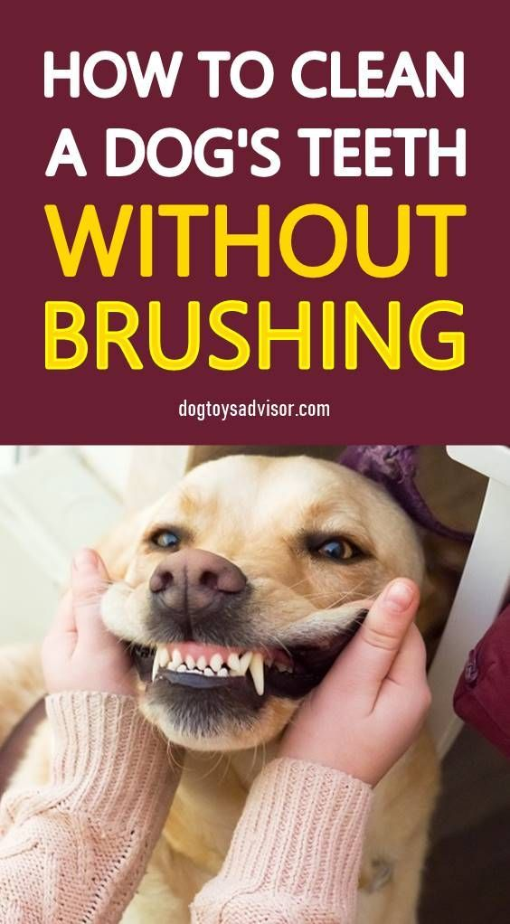 How to Clean Your Dog's Teeth At Home | Dog Teeth Cleaning At Home | Dog Teeth Problems | I U...