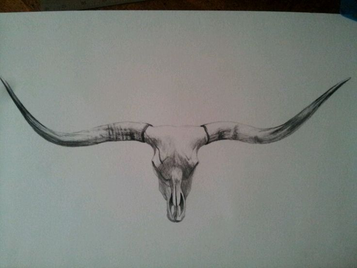 Longhorn skull drawing