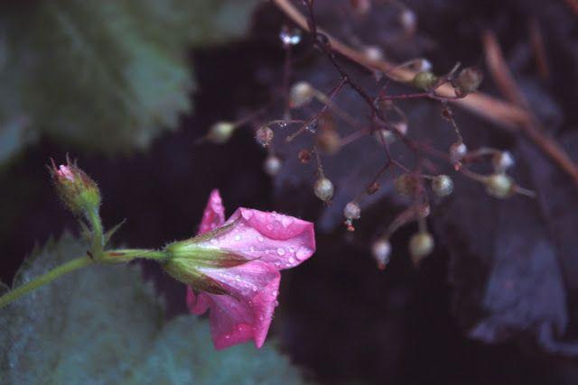 Herkkupurkki: valokuva, flower