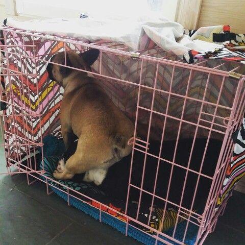 Mondays! #dog #frenchbulldog #monday #staffordshirebullterrier