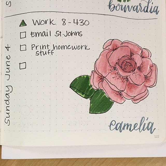 Not much on the schedule for today. I am feeling the pink vibes with yesterday's #bouvardia and today's #camellia for #AFlowerADay_June challenge. There seems to be a bunch of participants and it is making me so happy! . . #bujo #bujojunkies #bulletjournal #bulletjournaljunkies #flowers #june #doodle #doodlechallenge #drawingchallenge #drawing #lettered #lettering #handlettered #tombow #sharpiefinepen @scribblesthatmatter #friday #saturday #sunday #calligracrowd #calligrafriends