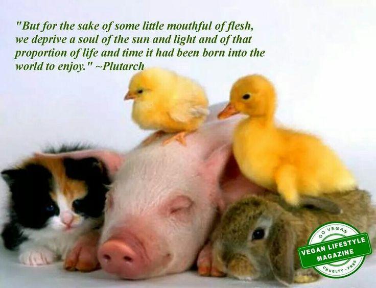 Image result for cute animals vegan