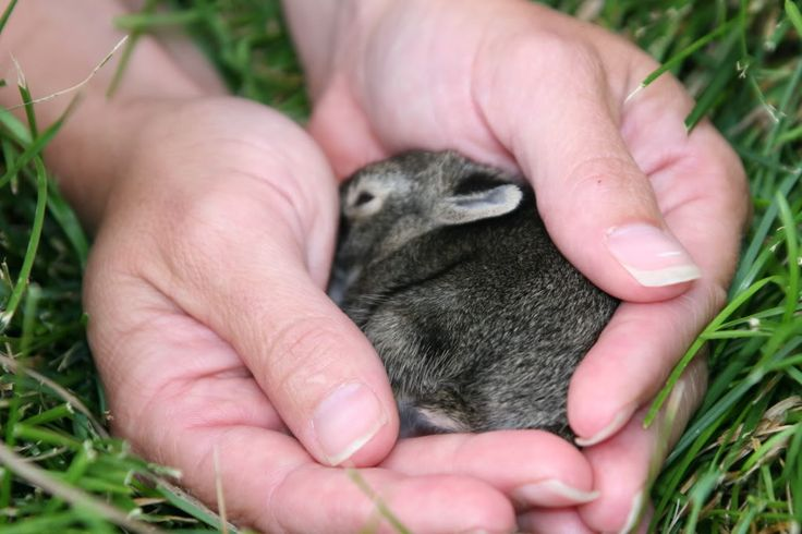 Really Cute Baby Bunnies For Sale