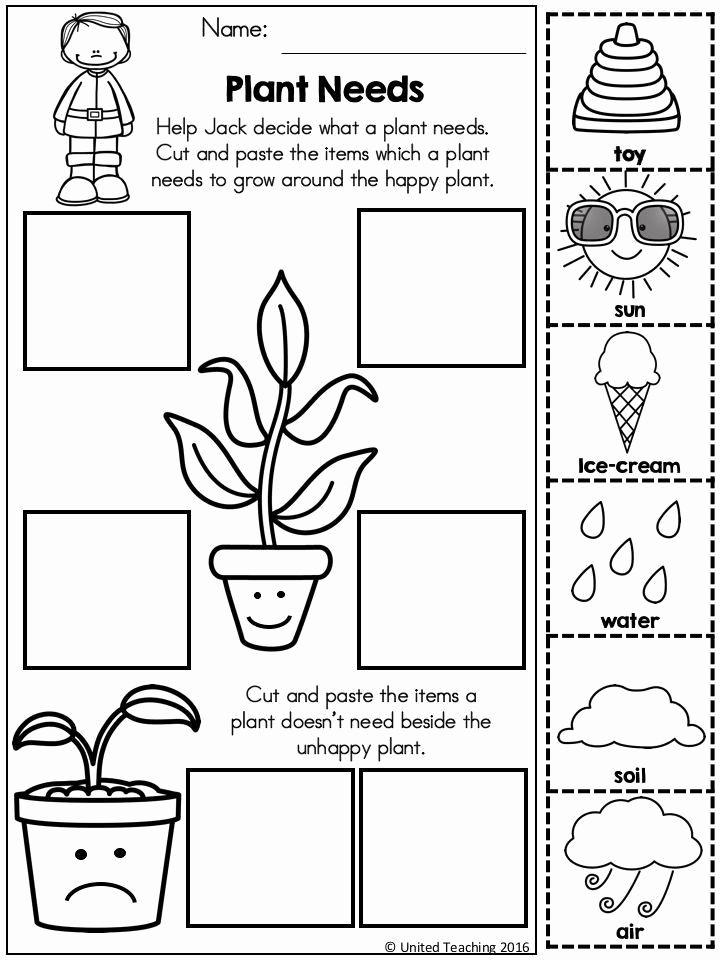 Worksheet For Kindergarten Science Pdf In 2020 Kindergarten Science Science Worksheets Plants Kindergarten