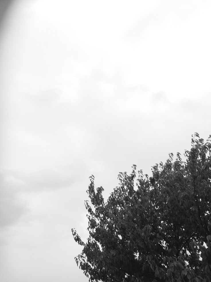 #wallpaper #tree #clouds #grey #black #white
