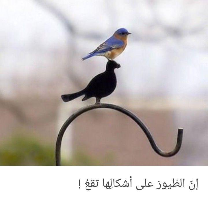 Pin By Najd On مماراق لي Animals Bird