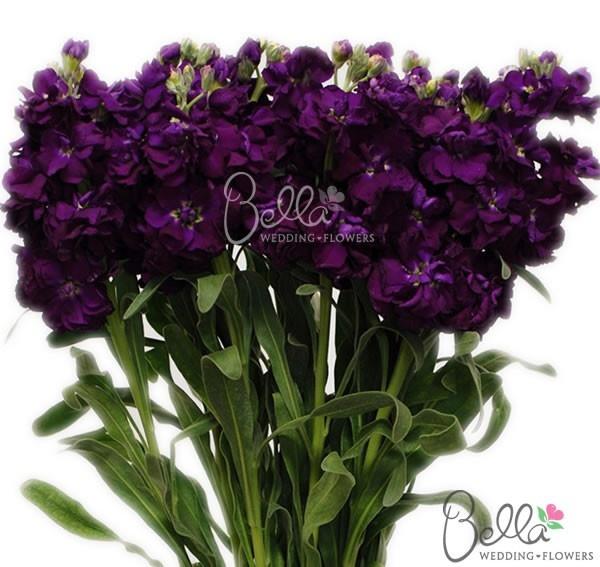 Fresh Dark Purple Stock | Filler Stock by Bella Wedding Flowers