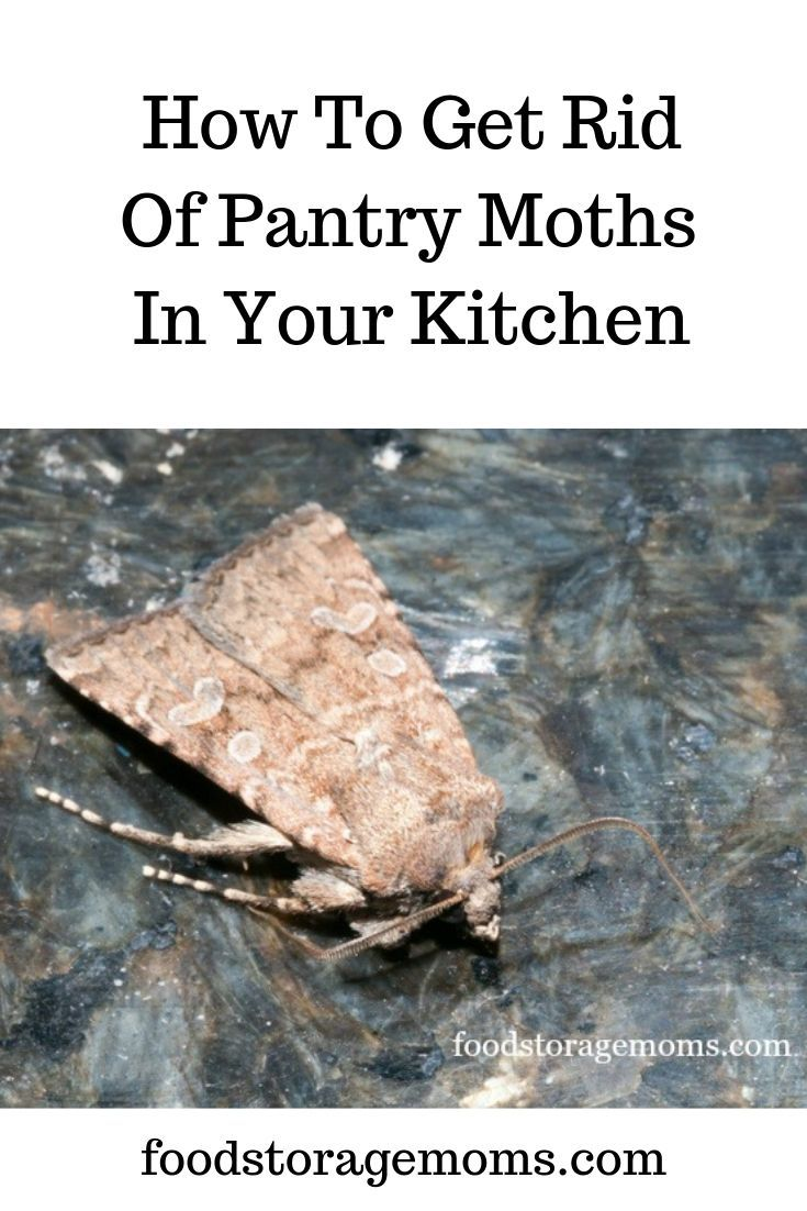 These Tips Will Walk You Through Step By Step How To Get Rid Of Those Pesky Pantry Moths Pantry Moths Kitchen Food Storage Pantry
