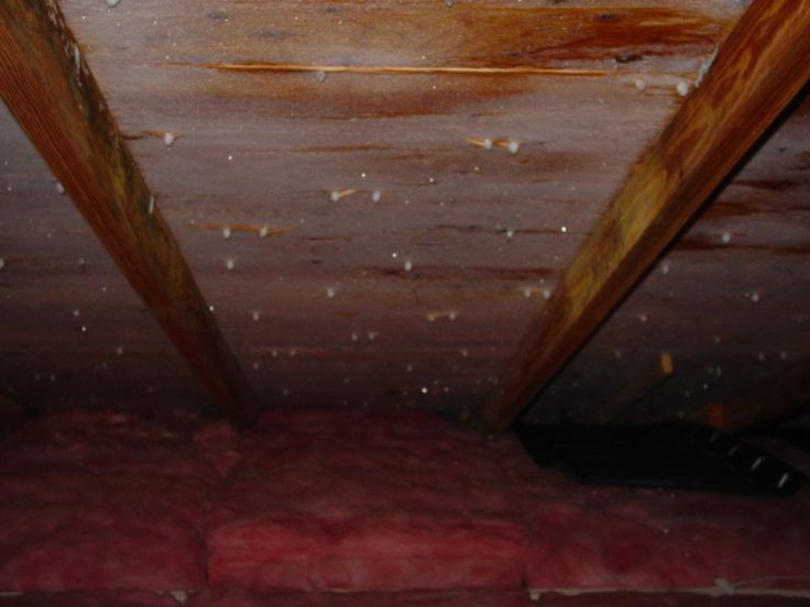 13 Best Danger Of Mold In Attic Images On Pinterest