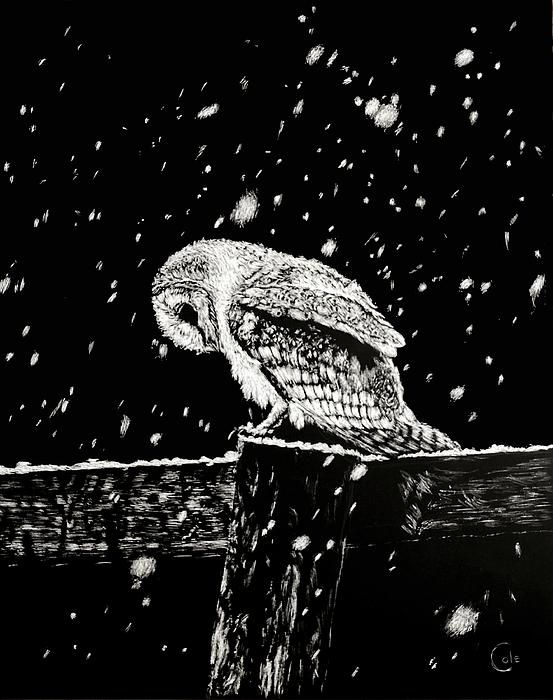 """""""Snowfall at Night"""" by Nathan Cole. Scratch art of a snow owl on a fence post."""