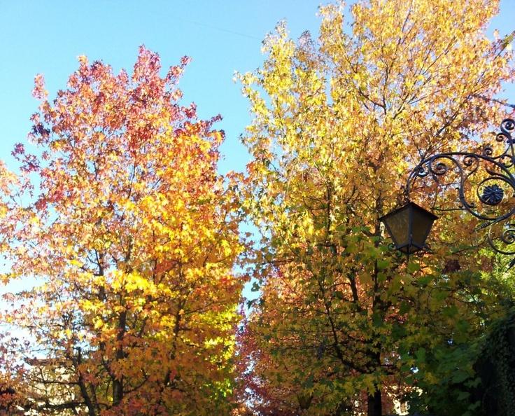 #MassinoVisconti ( #Novara #Piedmont #Italy ) #autumn