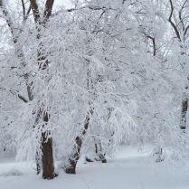 Magnifique hiver à Montréal