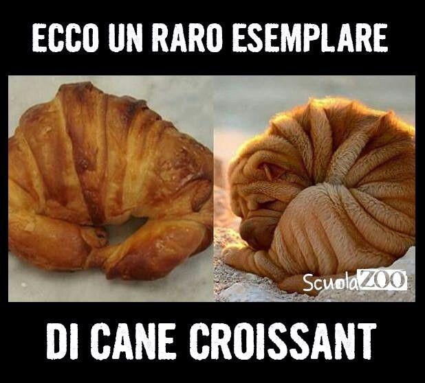 IL CANE CROISSANT