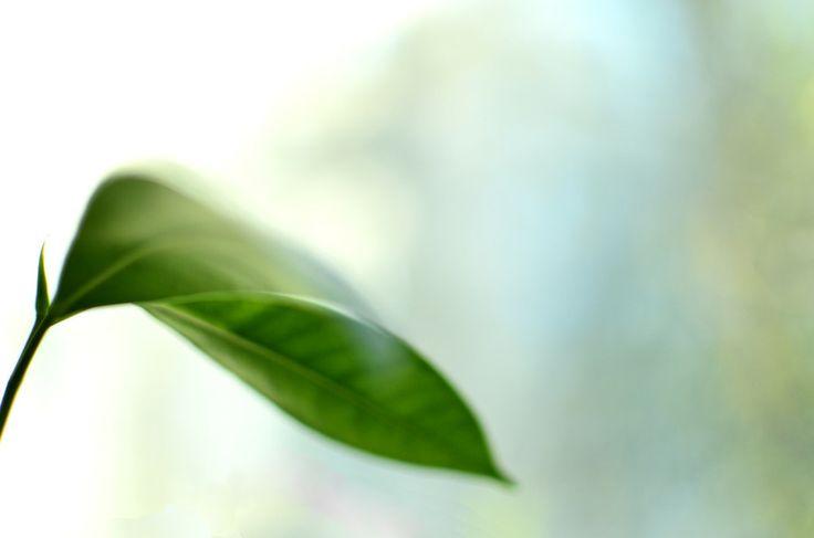 Spring leaf - the essence of life