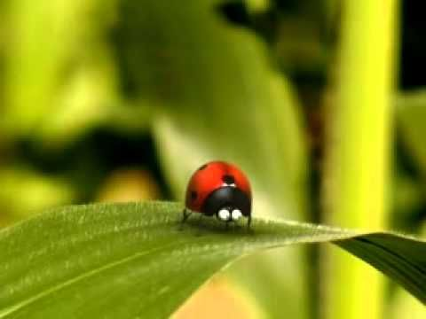 ▶ La vie privée des insectes - Catapulte - YouTube