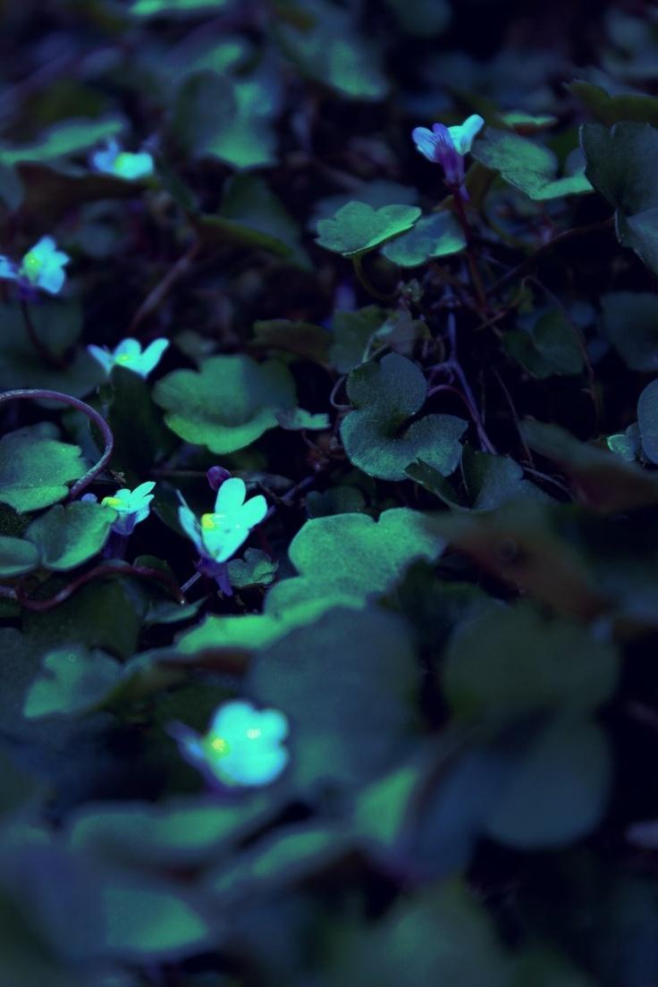 Green With Images Moon Garden Midnight Garden Nature Inspiration