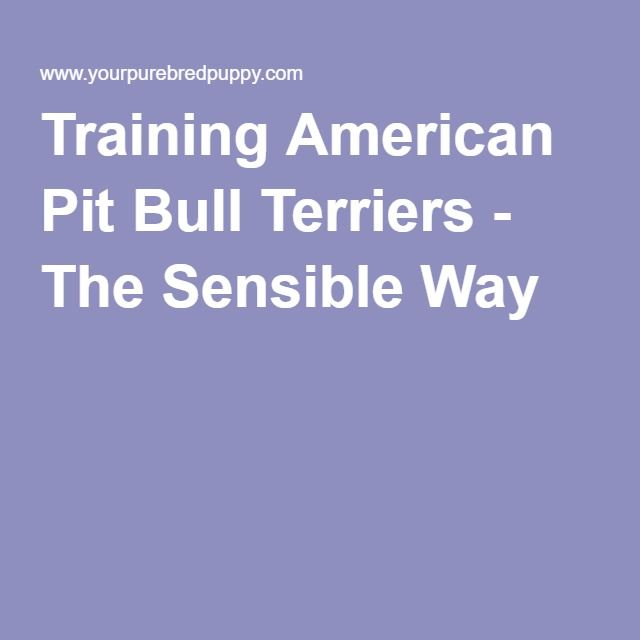 Training American Pit Bull Terriers - The Sensible Way