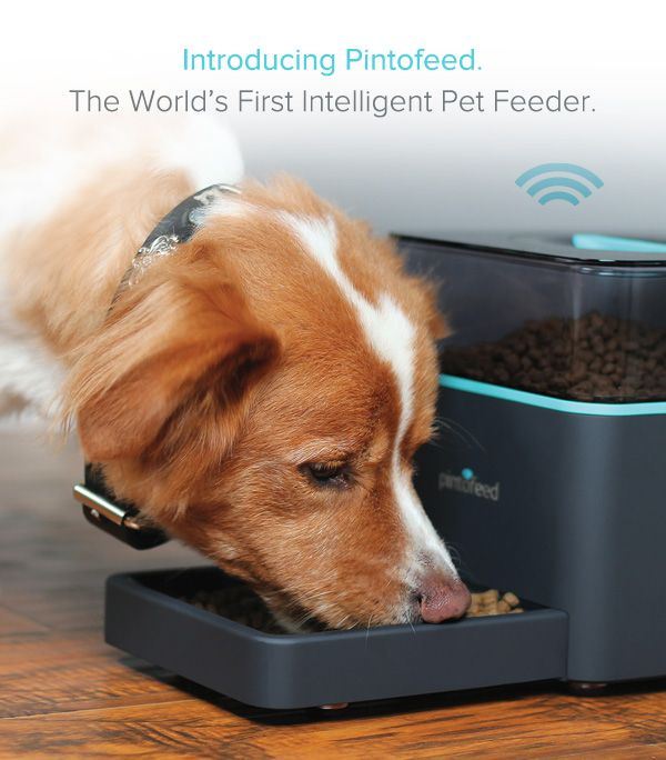Feed Your Pet from Your Phone with Pintofeed.  Pintofeed is the world's first pet feeder that truly understands the needs of you and your pet.