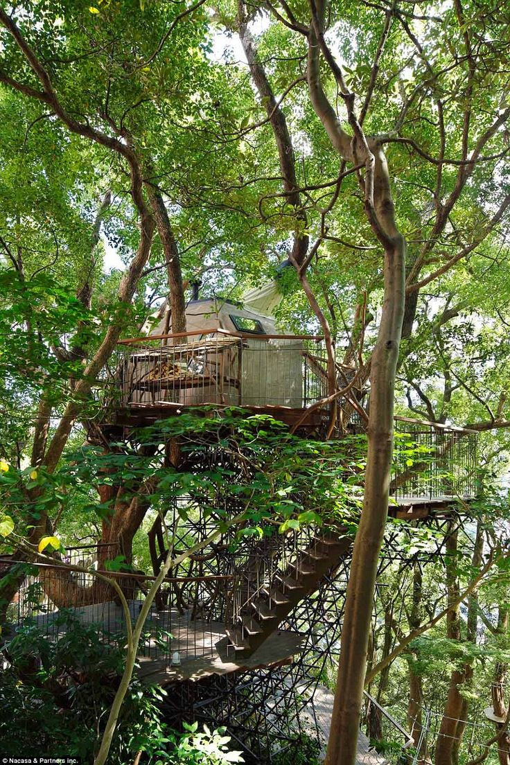 Kusukusu is a stunning treehouse constructed around a towering camphor tree in Atami, southern Japan