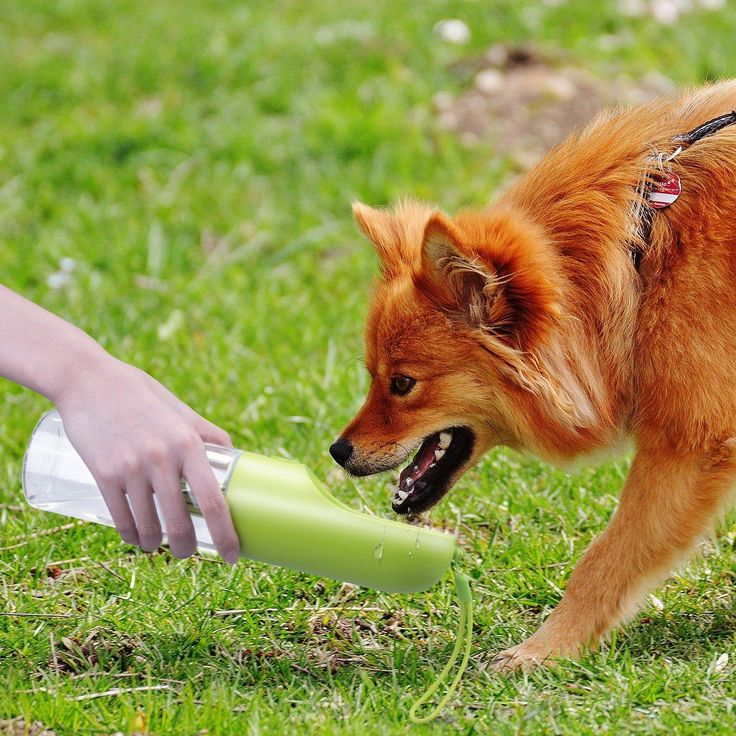 Pet Travel Portable Water Dispenser Bottle Travel Feeding Bowl Outdoor Pet Dog Filtrate Kettle at Banggood