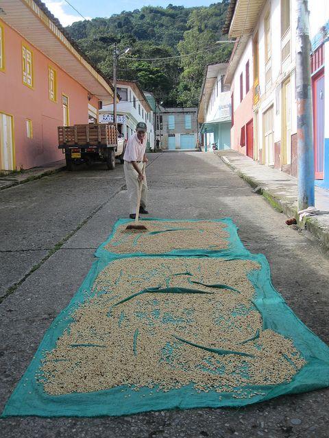 Imagen del secado del café común en las calles de Genova, Quindio.