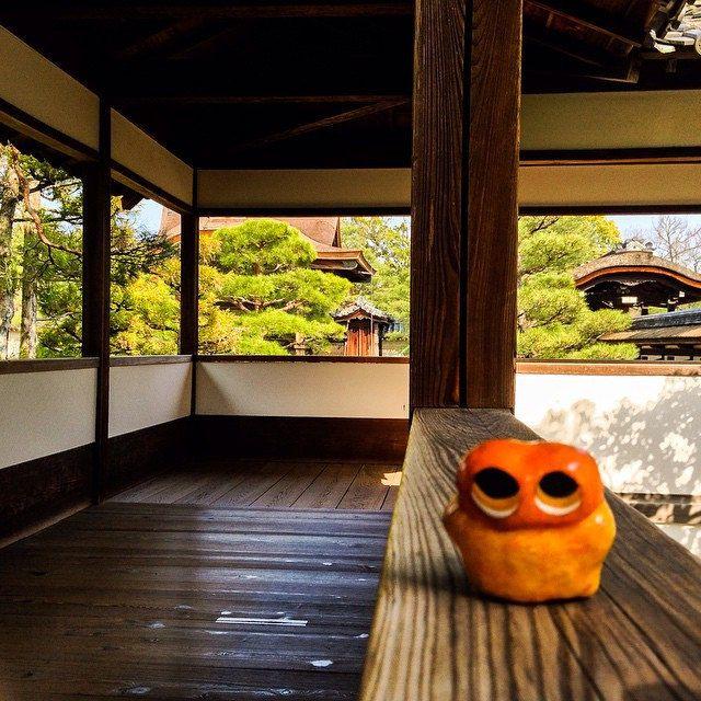 Visiting Ninna-ji/仁和寺 #mizumushikun #kyoto #ninnaji #temple #Japan #japanese #art #architecture #alien #exploring #landscape #greens