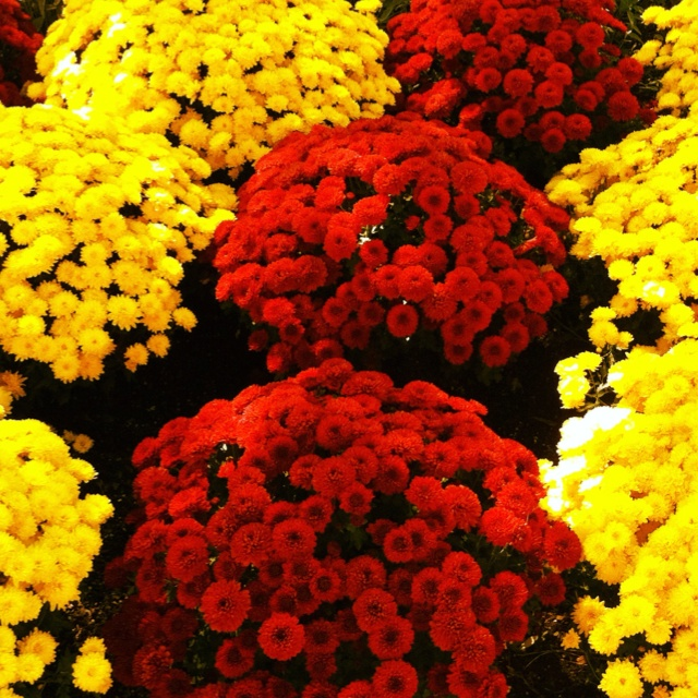 33 Beautiful Flower Beds Adding Bright Centerpieces To: 132 Best Flowers {Mums} Images On Pinterest
