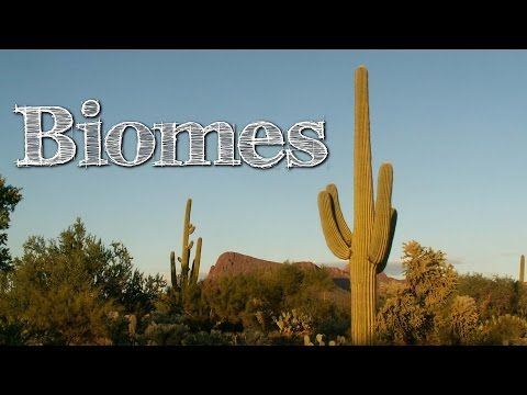 Biomes of the World for Children: Oceans, Mountains, Grassland, Rainforest, Desert - FreeSchool - YouTube