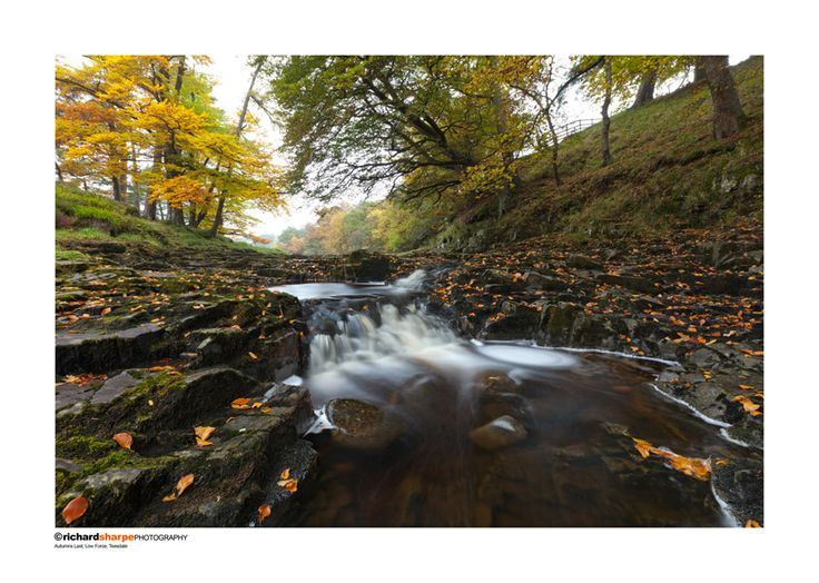 Autumns Last, Low Force, Teesdale