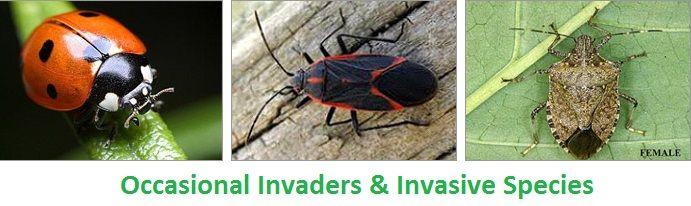 13 Best Bed Bug Stuff Images On Pinterest 3 4 Beds Pest
