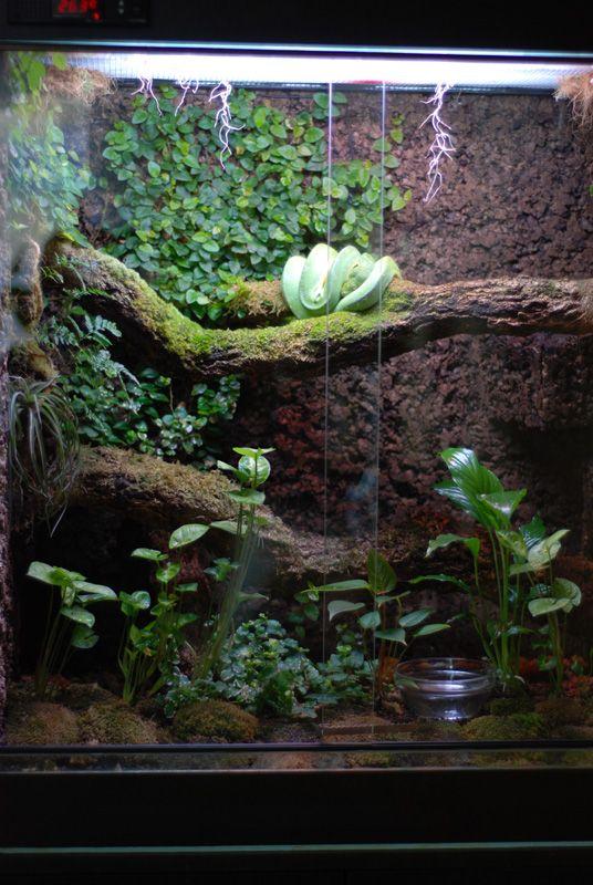 Spathiphyllum Tillandsia Davallia Ficus Pumila