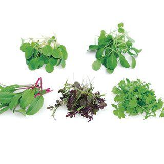 Rainbow Mix Microgreens Seeds