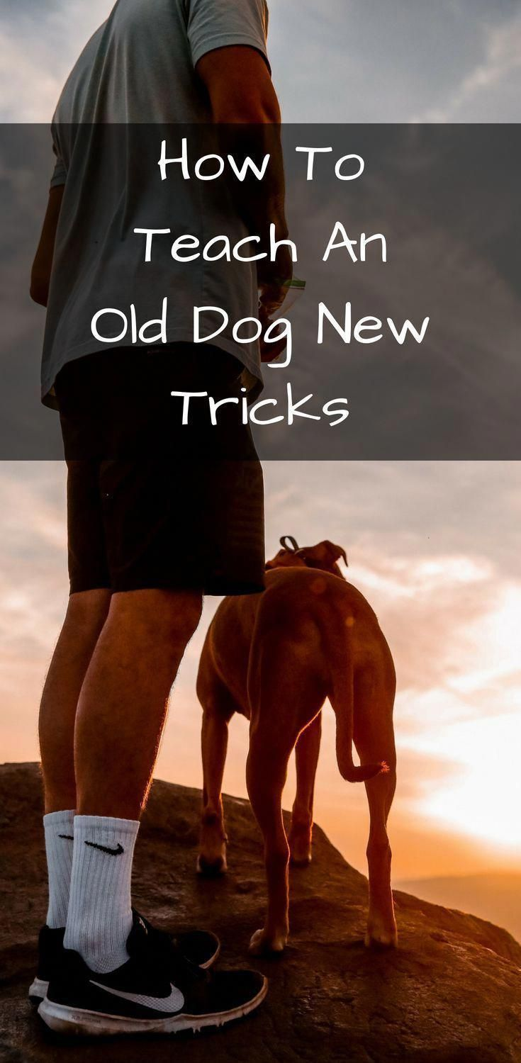 Convivial Halved How To Train Your Dogs Check Dog Training Tips
