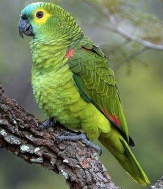 SOS Animal  com amor: Aprenda a cuidar de um papagaio
