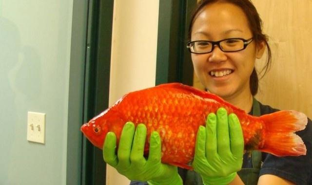 17 meilleures id es propos de lac tahoe sur pinterest for Tarif poisson rouge