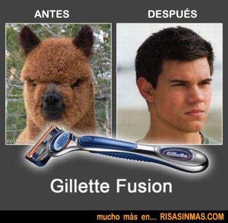 Antes y después de un buen afeitado. http://www.gorditosenlucha.com/