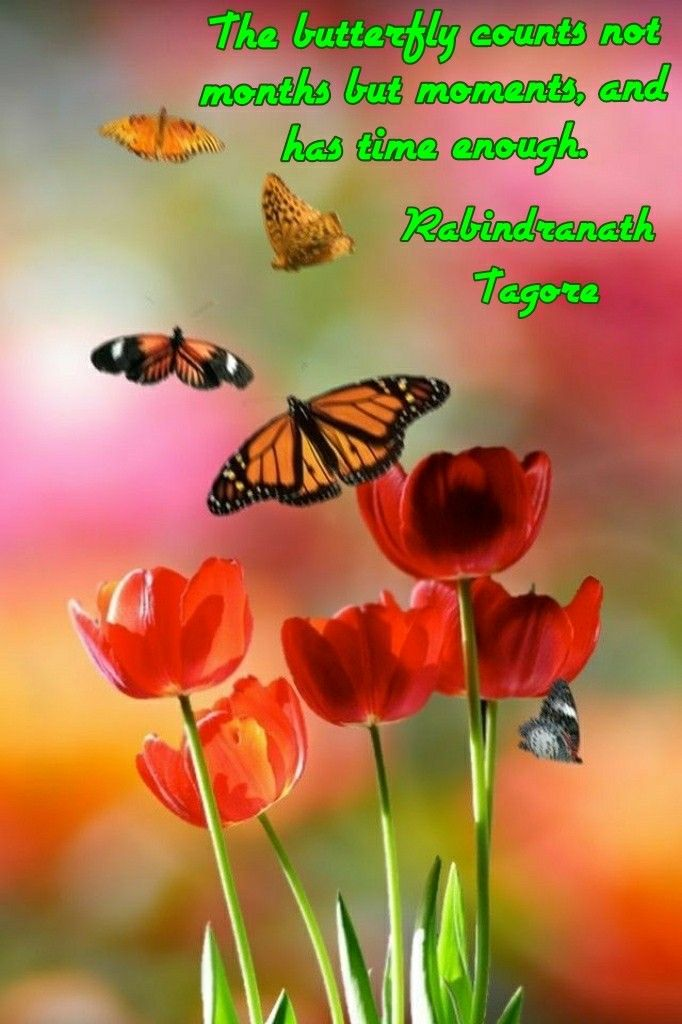 'The butterfly counts not months but moments, and has time enough.' Rabindranath Tagore #poet #rabindranathtagore #quoteof #rabindranathtagorequote #quotes  #butterfly #butterflies #counts #time #enough #moments #months #red #flowers #redflower #redflowers #live #memes #beauty #nature #meme #quotesdaily #dailyquotes #hope #dailymemes #love #lovelife #life