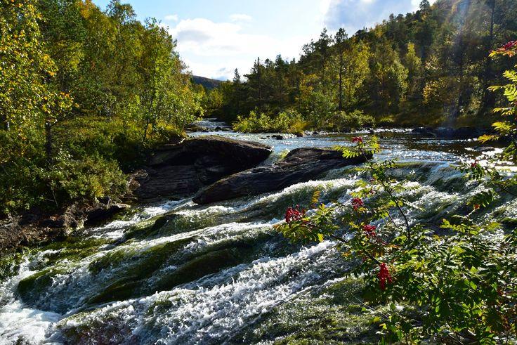 Beautiful autumn nature in the Norwegian forest