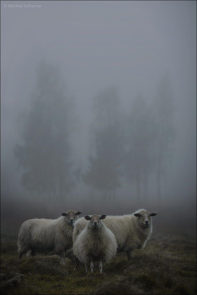 """I never worry about the future - it comes soon enough."" - Albert Einstein..sheep"
